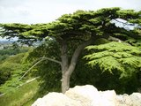 2013-08-24-1371-carisbrooke-tree.jpeg